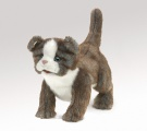 Scottish Fold Kitten Puppet - Folkmanis (2989)