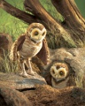 Owl, Burrowing Puppet - Folkmanis (2578)