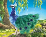 Peacock Puppet - Folkmanis (2539)