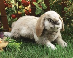 Holland Lop Rabbit Puppet - Folkmanis (2892)
