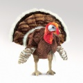 Turkey Puppet - Folkmanis (2582)