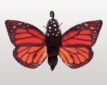 Monarch Lifecycle Puppet - Folkmanis (3073)
